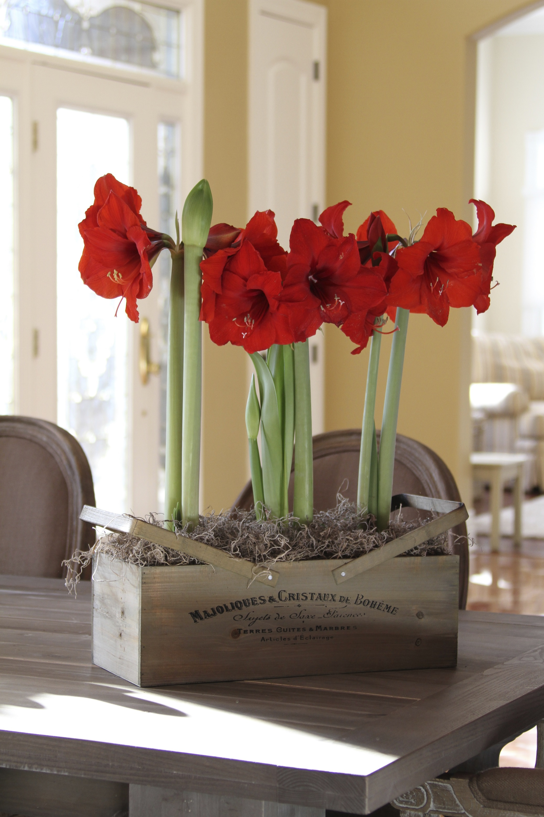 amaryllis gift kit from longfield gardens