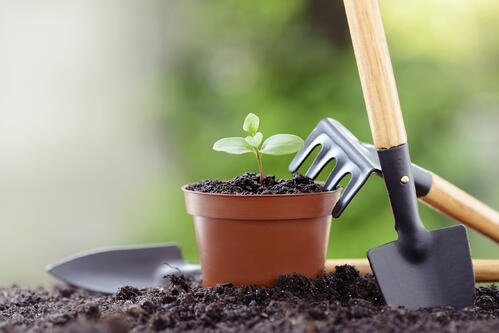gardening is in, gardening and millennials, garden media group, gardening, planting, working in the garden, gardening is cool, millennials in the garden