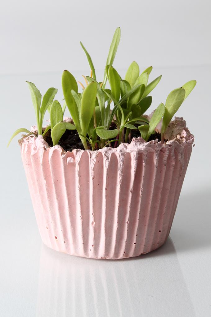 cupcake planter, portable gardening, millennials, garden trends, trends that matter to millennials, garden media group, pink, planter