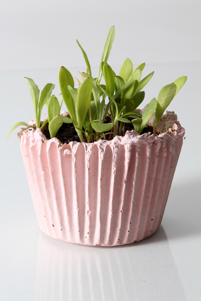 cupcake planter, nativecast, garden media group, pitching holiday gift guides, types of products, garden brand, garden marketing, public relations