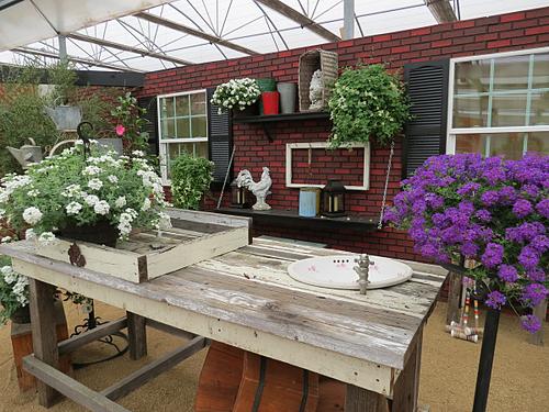Suntory, Flowers, Garden Space, Table, Grow
