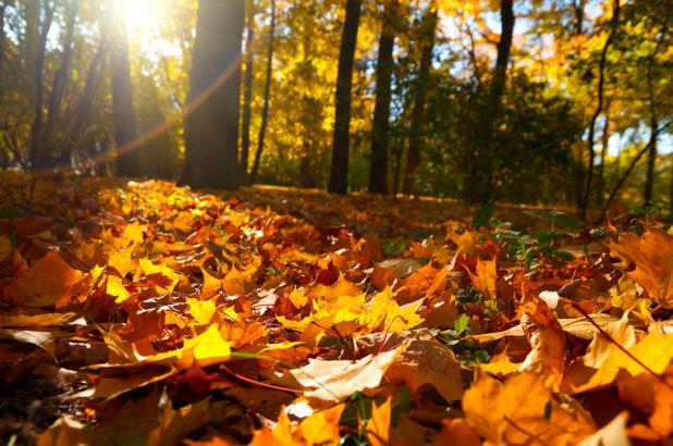 fall, autumn, pitching holiday gift guide, when to pitch for the holidays, garden media group, public relations, garden brand, garden product