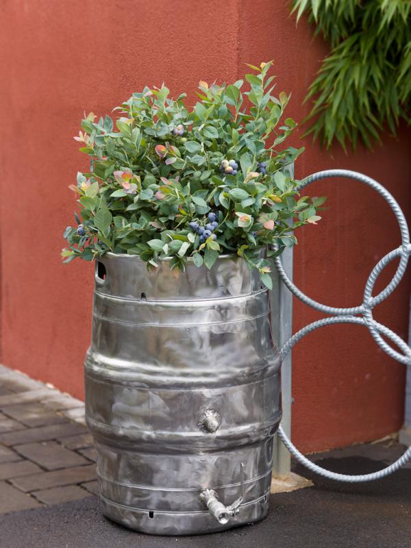 Find new uses, Brazelberries keg, repurpose keg, crowdsource ideas