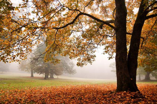 davey tree, fall, garden media group, fall trees with fog, content marketing, creating content, new content