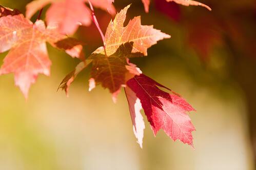 fall leaves, autumn, garden media group, pinterest, trends, pinterest trending boards