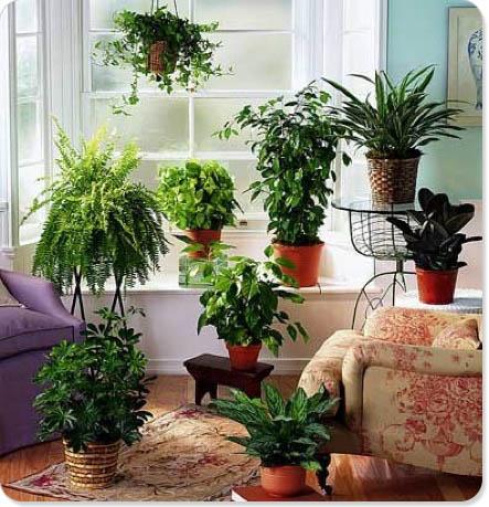 garden media group 02for you loves houseplants o