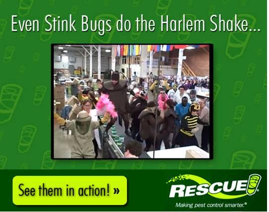 Memes for Business, Rescue, Stink Bugs, Harlem Shake