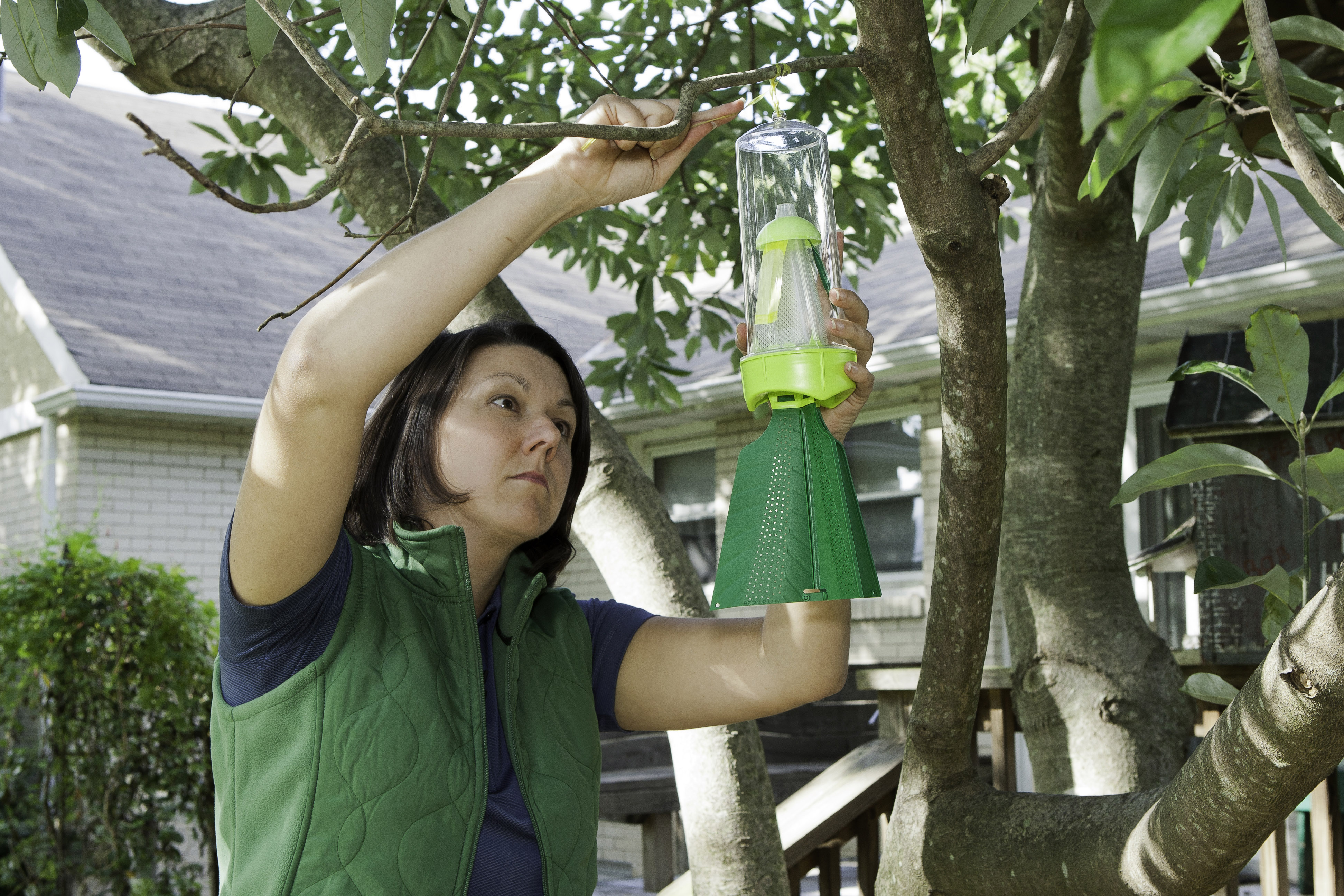 rescue stink bug trap
