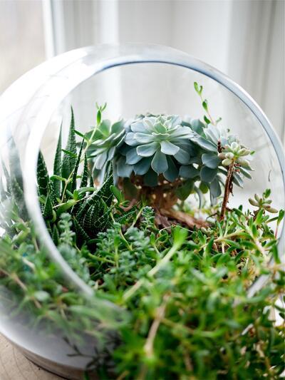 Garden Media Group, Garden Brands, emails, plants