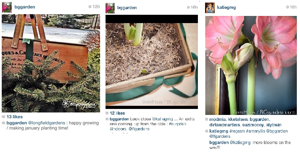 longfield gardens, media relations, sample program, garden chat, media relations, garden media group