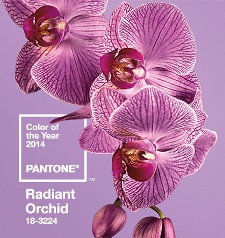 orchid resized 600
