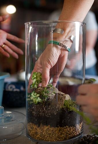 Terrarium Workshop credit Joshua Bright