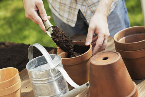 potting soil, gardening at home, garden media group, increase productivity at the office, garden business