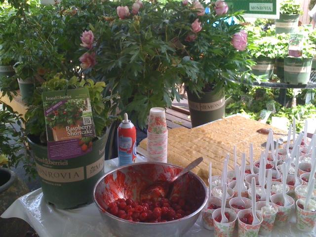 brazelberries, thornless berries