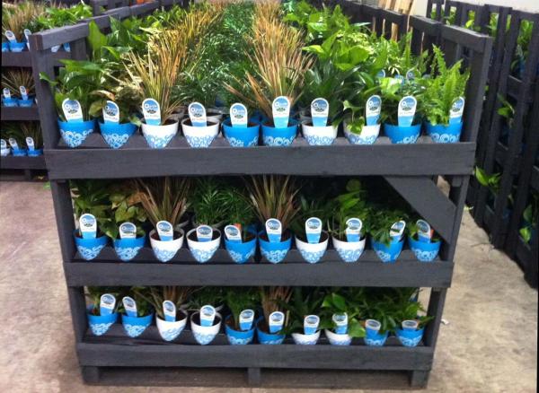 costa farms houseplants, best houseplants