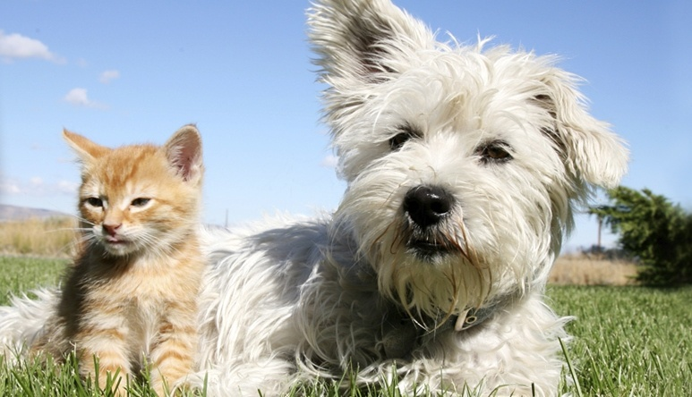 Dog_and_Cat_cropped.jpg