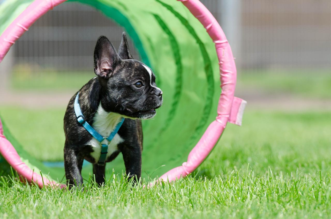 Espoma_Safe_Paws-_Petscaping.jpg