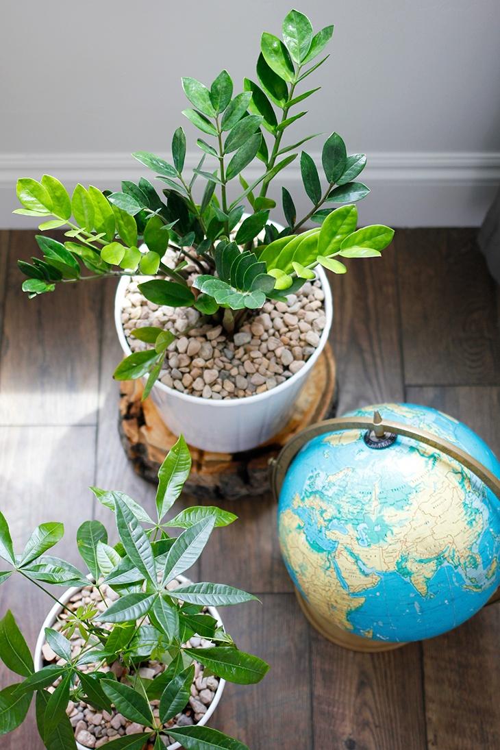 Office-Plants-1.jpg