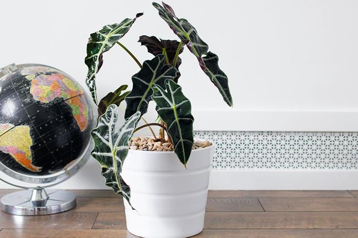 Office-Plants-2.jpg