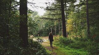 Trend 2 Wellness Hotspots - Forest Bathing.jpg