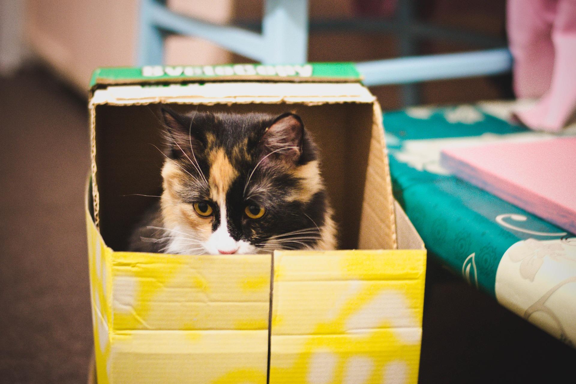 cat-650770_1920.jpg