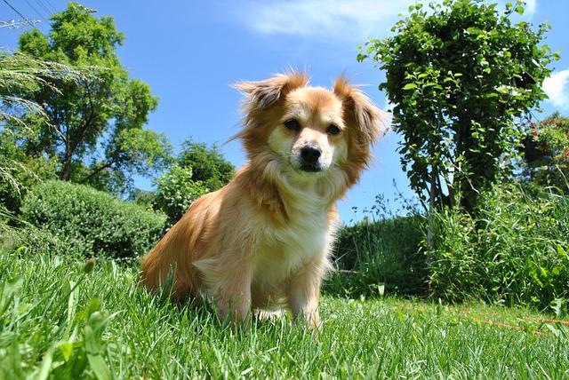 dog-410946_640.jpg