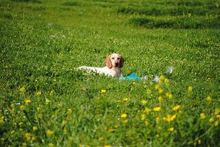 dog-in-field-746913_960_720.jpg