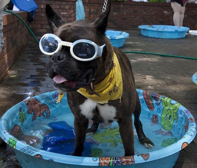 dog_pool.jpg