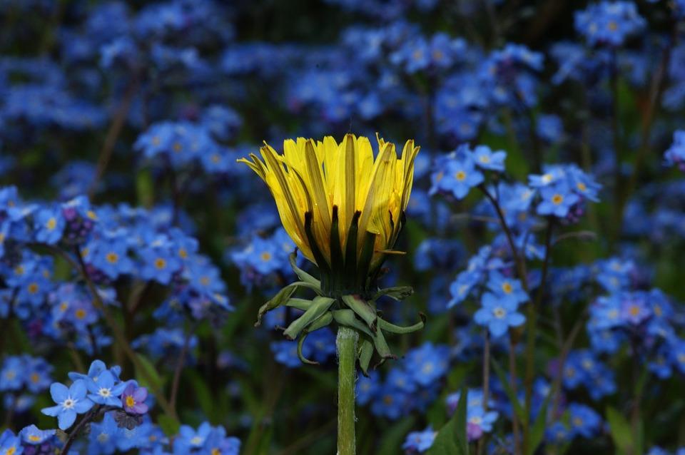 flower-2725981_960_720.jpg