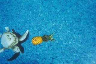 pineapple-supply-co-244472.jpg