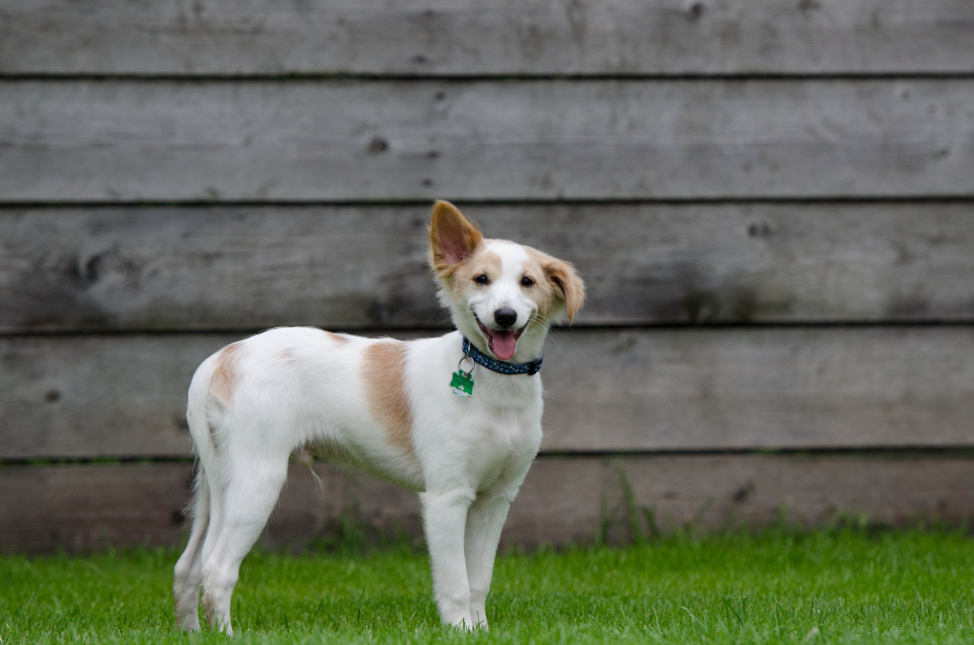 puppy-750629_1920.jpg