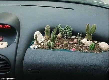 succulents on the go