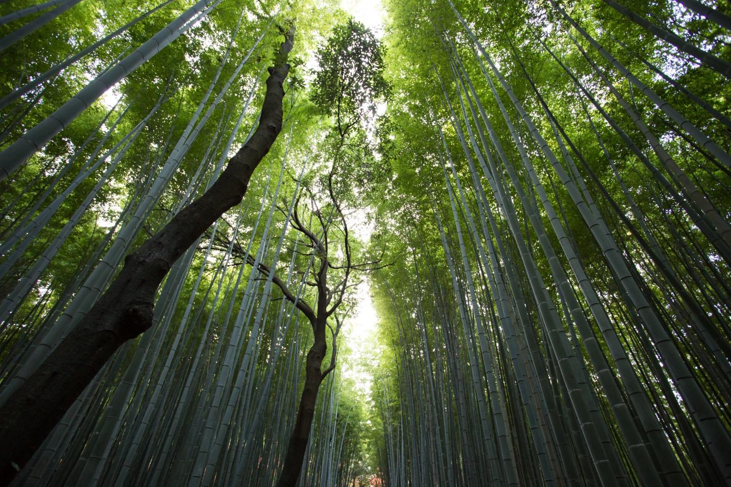 Tree, Public Relations, Marketing, Branding, Garden Media Group, Earth Day, Green Living